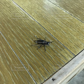 木製の床の上を歩く犬の写真・画像素材[840370]