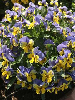 春の花の写真・画像素材[2032405]