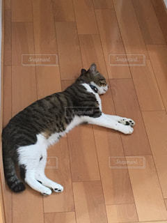 白い面の上に座って猫 - No.840765