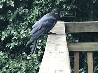 ベンチに座っている鳥の写真・画像素材[840958]