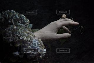 カタツムリと紫陽花の写真・画像素材[1119732]