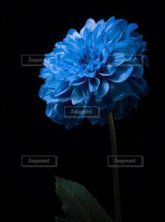 青い花の写真・画像素材[1119737]