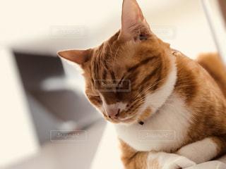 高い所が大好き猫の写真・画像素材[842100]