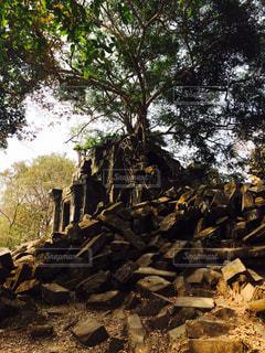 ベンメリア遺跡の写真・画像素材[841336]
