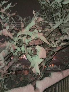 京都の大雪の写真・画像素材[841375]