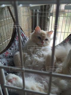 ケージの横になっている猫の写真・画像素材[841684]