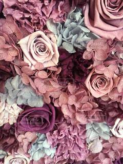花の詰め合わせの写真・画像素材[841459]