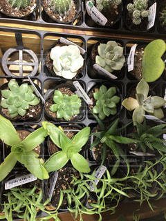100均の観葉植物のイメージの写真・画像素材[1236713]