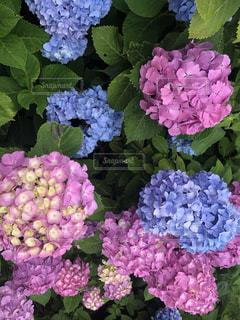 花のクローズアップの写真・画像素材[2186818]
