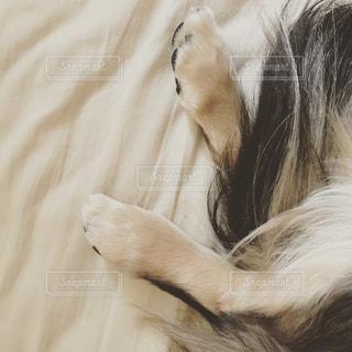 犬の足の写真・画像素材[841857]