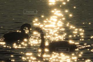 光に包まれての写真・画像素材[842027]