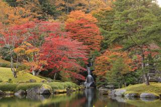 秋の池の写真・画像素材[846282]