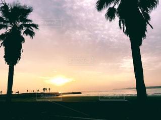 ヤシの木の横にある水の体に沈む夕日の写真・画像素材[842439]