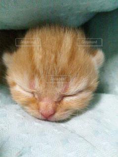 近くに眠っている猫のアップの写真・画像素材[842925]