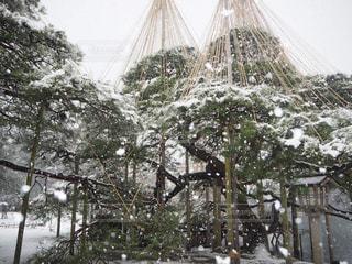 冬の兼六園の写真・画像素材[844801]