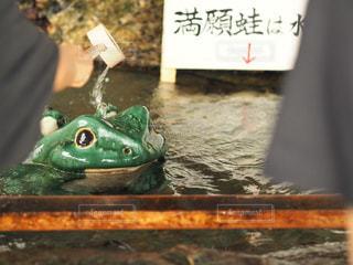 二見蛙🐸の写真・画像素材[844916]