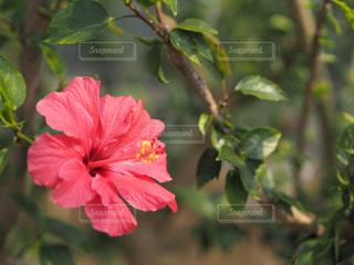 春の温室の写真・画像素材[846000]