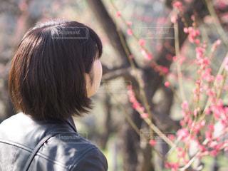 大阪城公園の梅を眺める人。の写真・画像素材[1066902]