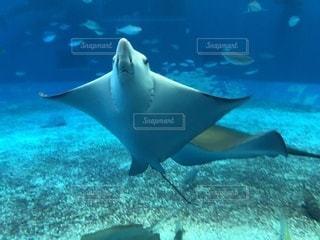 水面下を泳ぐ魚たちの写真・画像素材[997780]