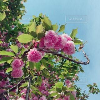 自然の写真・画像素材[25524]