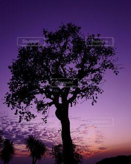 背景の夕日とツリー - No.843241