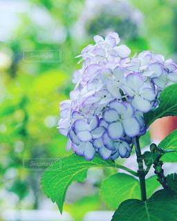 近くの花のアップ - No.843270