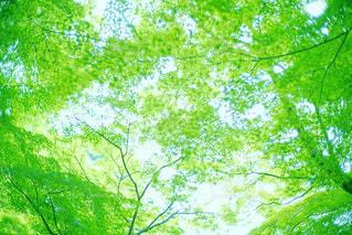 フォレスト内のツリー - No.843272