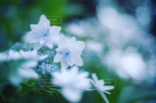 近くの花のアップ - No.843273