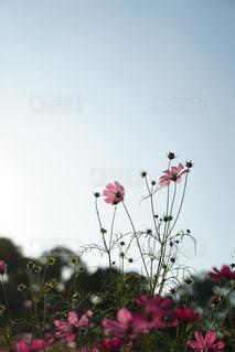 テーブルの上の花の花瓶 - No.843317