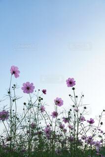 フィールドに大きなピンクの花 - No.843318