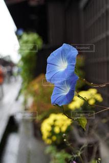 近くの花のアップ - No.843319