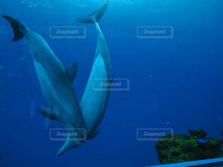 水面下を泳ぐ魚たち - No.843462