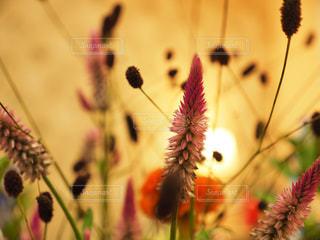 近くの花のアップ - No.843465