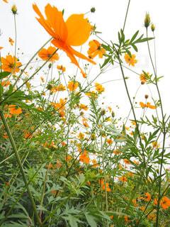 オレンジ色の花 - No.843469