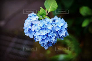 近くの花のアップ - No.844209