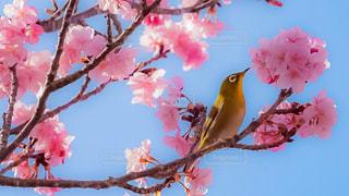 木の枝にピンク色の花のグループ - No.1029947