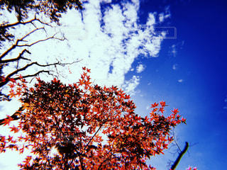 大きな木の写真・画像素材[1376598]