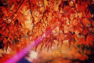 近くの木のアップの写真・画像素材[1376600]