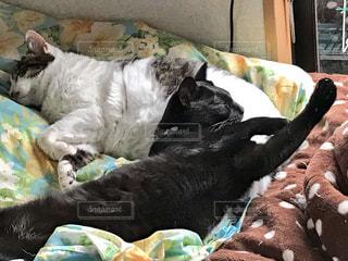 ベッドの上で横になっている猫二匹の写真・画像素材[999358]