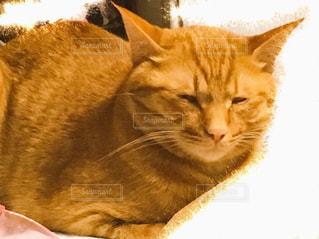 ベッドの上で横になっている猫の写真・画像素材[999363]