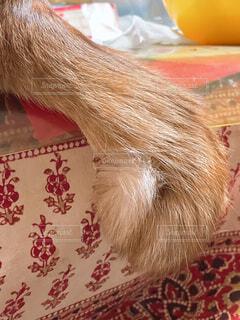 猫の渦巻き鍵尻尾の写真・画像素材[4456912]