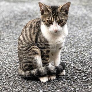 白い面の上に座って猫 - No.843377