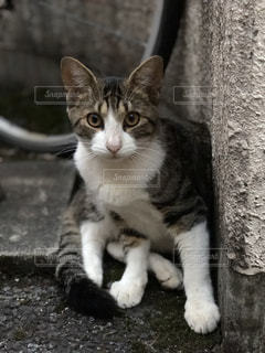 白い面の上に座って猫の写真・画像素材[843404]