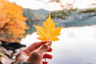 秋を狩る。の写真・画像素材[843629]