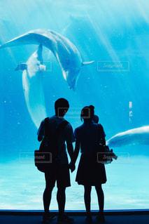 水族館デートの写真・画像素材[843677]