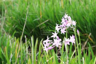 ピンクの花の写真・画像素材[848293]