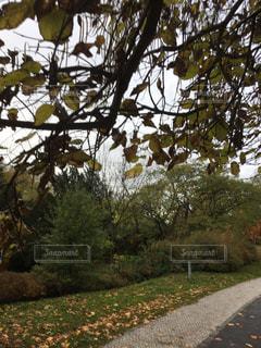 プラハの公園 - No.844026