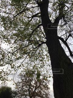 プラハの公園の木のアップの写真・画像素材[844027]