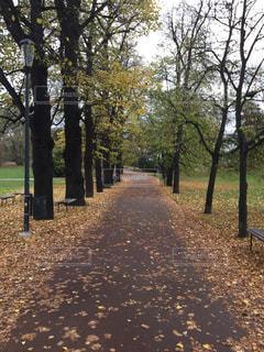 プラハの公園の並木道の写真・画像素材[844028]