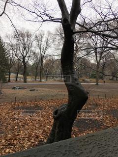 ニューヨーク セントラルパークの木の写真・画像素材[1002438]